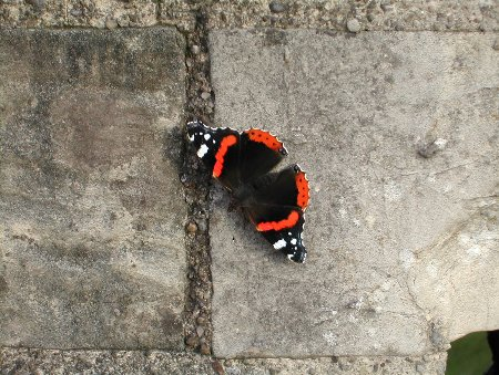 Butterfly on York walls