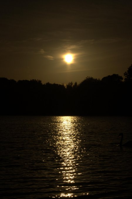 Coate Water Sunset Small